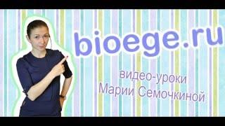 Задачи по генетике: Моногибридное скрещивание