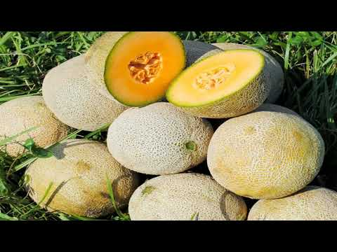 Dieta depurativa del melon