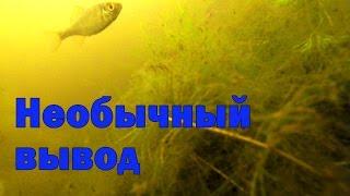 Отчёт о рыбалке в июне на карася, с геркулесом