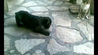 Eros The Boxer Vs Il Gatto