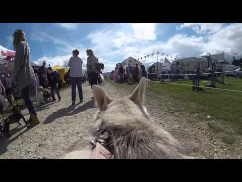 Northern Inuit Society show at All About Dogs in Newark 2015