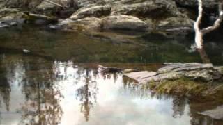 Prospecting Tuolumne county Ca.wmv