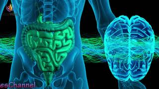 Stomach Colon & Digestion Disorder Treatment ➤ Theta Binau...