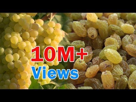 Raisins production process