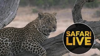 safariLIVE -  Sunrise Safari - July 21, 2018