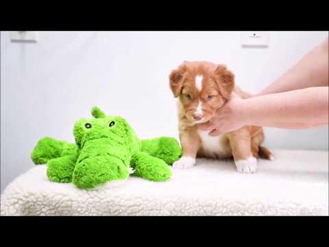 Pink's Puppies Present: Ms. White (week 7)
