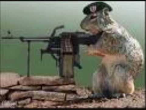 squirrel loses chestnut youtube