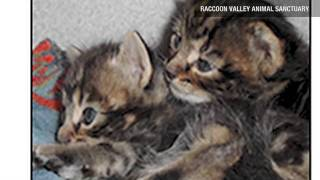 dog rescues two abandoned kittens