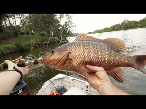 Mangrove Jack fishing - Coomera River QLD