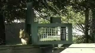 Squirrel Trap 1