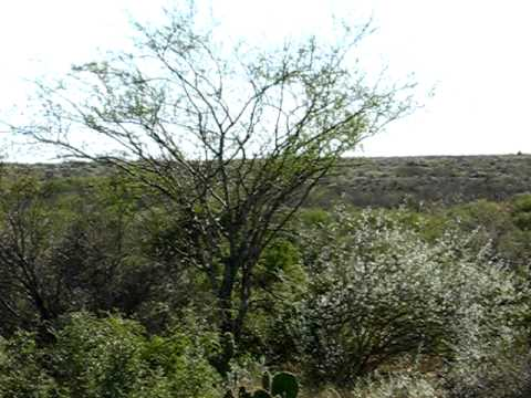 Laracuente Ranchito offered by Amistad Realty of Del Rio texas 3