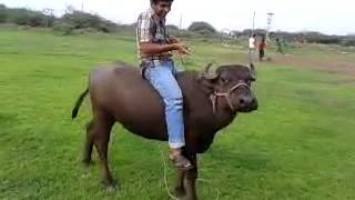 funny gujarati video