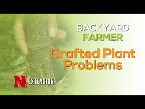Grafted Plant Problems