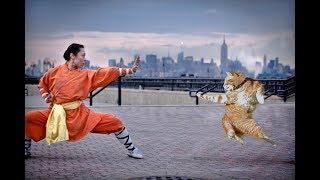 КУНГ-ФУ КОТЫ - настоящие мастера боевых искусств. Позитивная фото подборка 😄 👌🔥