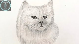 International Cat Day Special    Drawing basic Persian cat    #pencilsketching #internationalcatday
