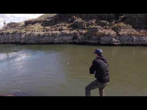 Giant White Sturgeon Fishing- Oregon Columbia River- 8ft 300lb