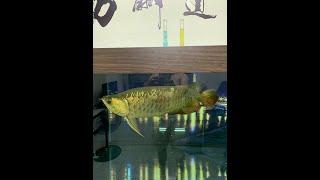 新設缸養菌期有多長?最安全的設缸方法 不怕害死魚