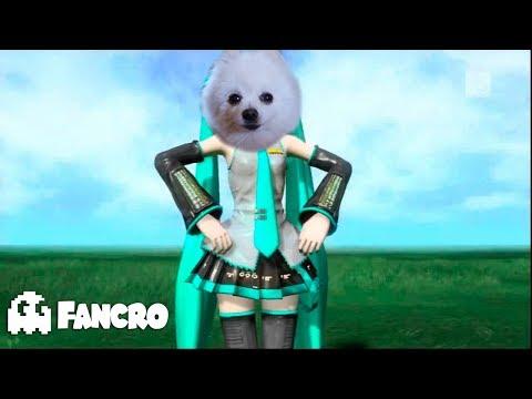 Levan Polkka - Cover Gabe the dog