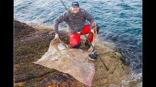 038ede8278e Monster Fish : 198lb Common Skate by Black Tide Fishing