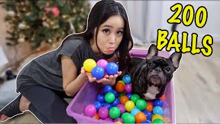 i-got-my-french-bulldogs-200-balls-for-christmas-vlogmas