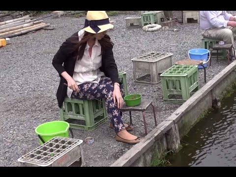 JAPAN STRANGE CULTURE :