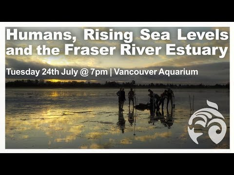 Humans, Rising Sea Levels And The Fraser River Estuary