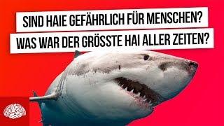 Was war der größte Hai aller Zeiten? - 10 Fakten über Haie