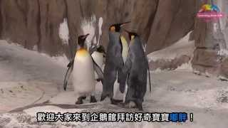 國王企鵝嘟胖換上新裝 比比看跟爸媽有啥不同 Du Pang The King Penguin Growing Up English Subtitles Available