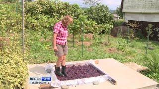 Домашнее вино в Сочи можно будет купить в магазинах