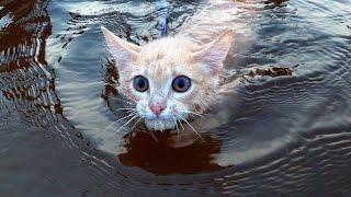 Этот котик любит плавать