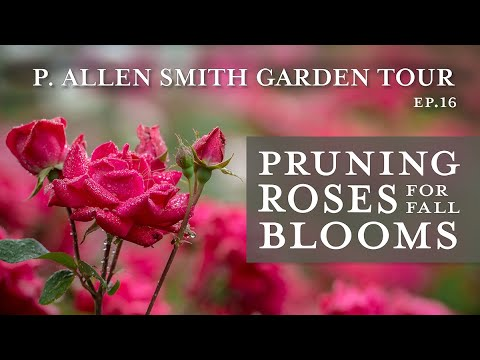 Pruning Roses for Fall Blooms | East Lawn Tour: P. Allen Smith (2019)