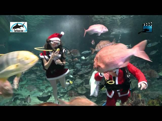 Mr & Mrs Santa Clause diving in Turkuazoo Aquarium