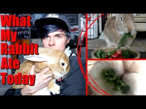 What My Rabbit Ate Today! (Vegan) | $2 Coupon