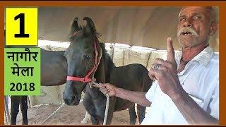 Indian Marwari Horse Trading Market :  Sell Horse Online : Rajasthan India