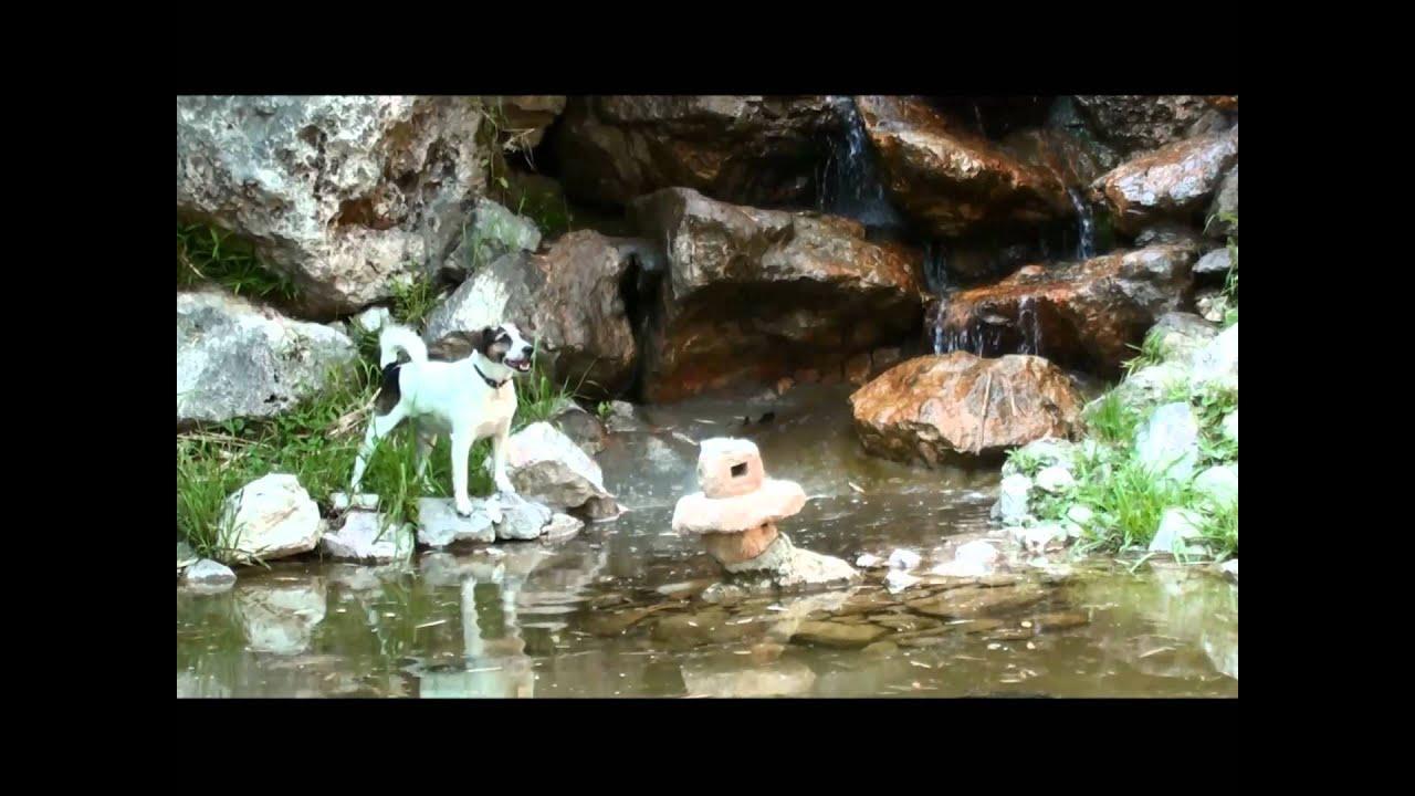 Jack giargino giapponese villa ormond cascata e laghetto for Costruzione laghetto koi