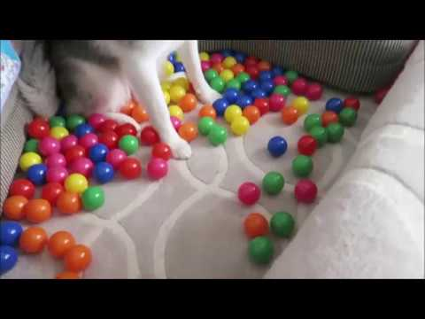 Funny Animal Pranks - cats pranks - dogs funny situations