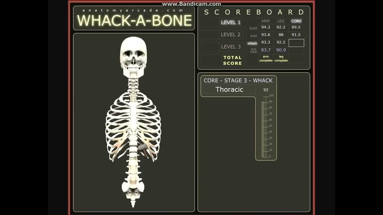 Whack A Bone - YouTube
