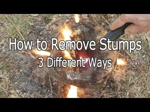 How to Remove Stumps Three Different Ways
