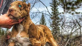 5 Scariest Dog Breeds People Actually Own!