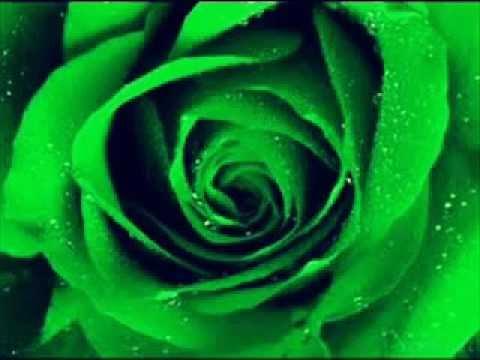 speciale dedicace a la rose verte youtube speciale dedicace a la rose verte youtube