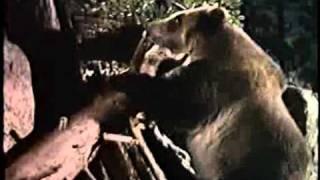 Tierra De Alimañas (The Night Of The Grizzly) (Joseph Pevney, 1966)