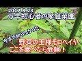 [モロヘイヤの毒性]牛も中毒死 ! (;゚〇゚) の動画、YouTube動画。