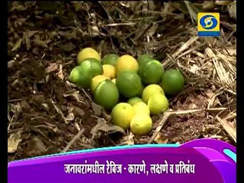 Krishidarshan - 01 November 2017 - लिंबू लागवड यशोगाथा.