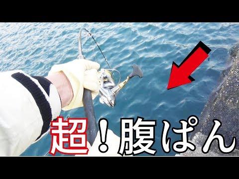 漁港のヘチから超腹ぱんが釣りあがった!