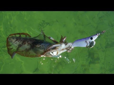 South Australia King George Whiting Squid Fishing