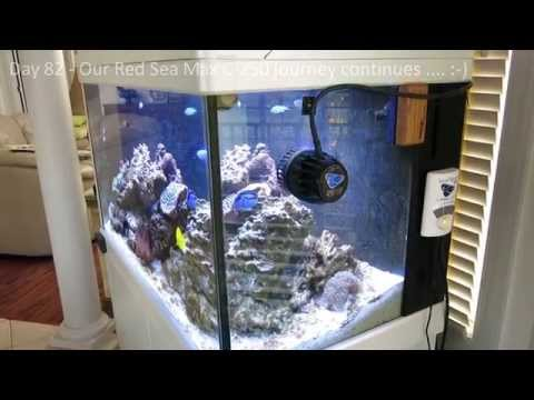 Red Sea Max C-250 Reef Aquarium - Part 5 - Building The Reef Day 78 to Day 86