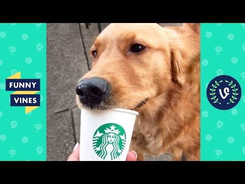 TRY NOT TO LAUGH - Cute Funny Animals | Funny Videos March 2019 thumbnail