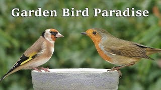Videos for Cats to Watch  Garden Bird Paradise ~ 8 HOURS