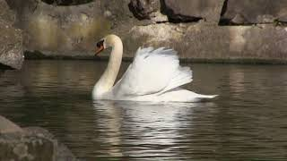 видео Воронцовский Парк в Алупке