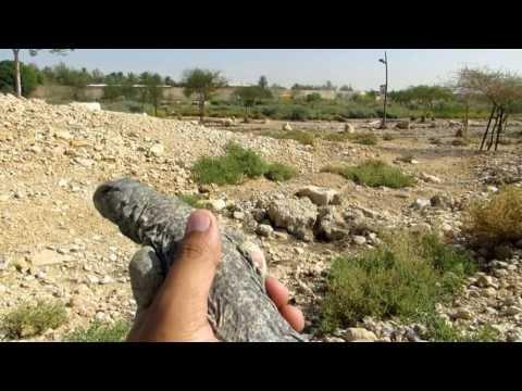 ﺇﻁﻼﻕ الضبان في وادي حنيفة برياض Uromastyx